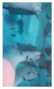 fish foot spa